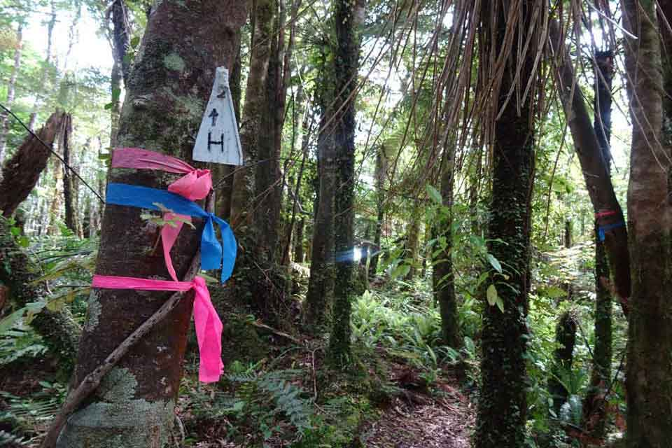 Markers in the Pupu Rangi Nature Sanctuary