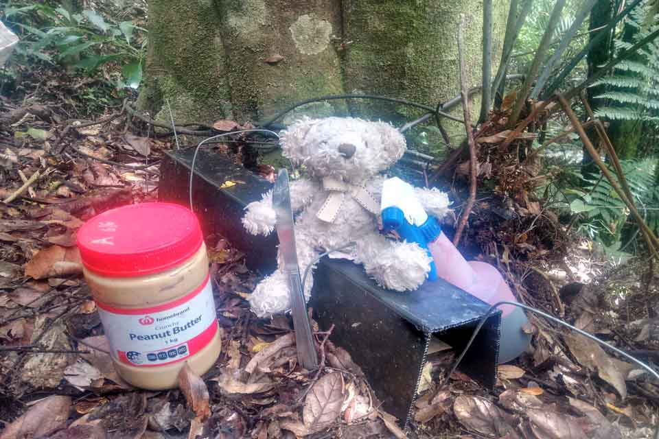 Rodent monitoring in the Pupu Rangi Nature Sanctuary